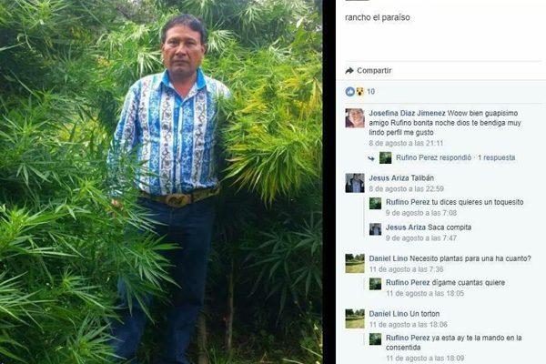 Al estilo del Chapo, regidor de Puebla se fotografía en plantío de marihuana