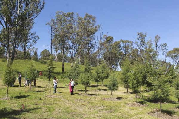 Costará 291 millones de pesos el Parque de Amalucan: SFA