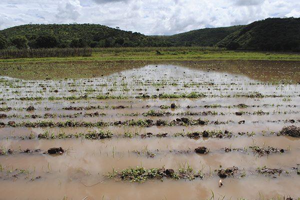 Resultado de imagen para afectaciones a sembradíos