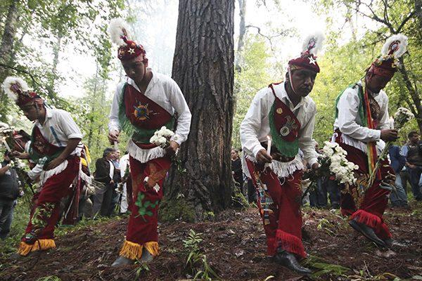 """Voladores de Cuetzalan en busca del """"Árbol Sagrado"""""""