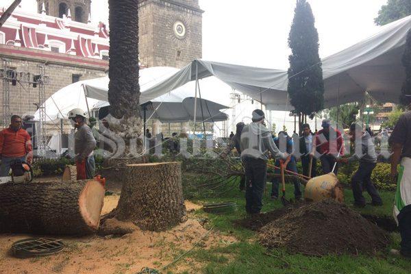 [Video] Inicia Comuna tala de viejos árboles del zócalo de Puebla