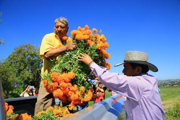 Producirá Puebla 247.7 mil toneladas de flor de muerto