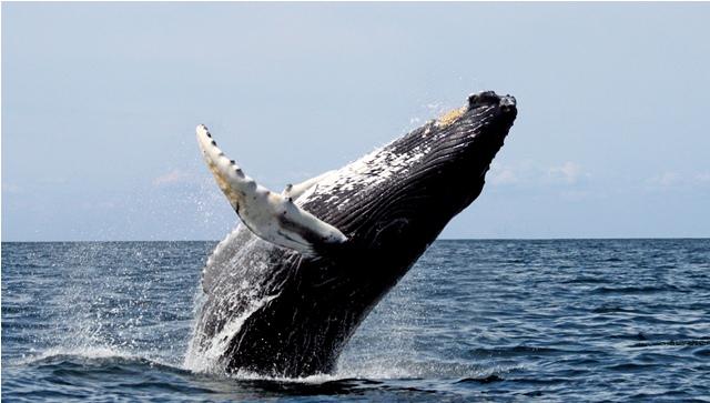 2 portada_Avistamiento de ballena