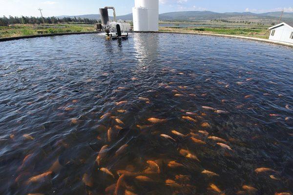 Duplica Puebla producción acuícola en siete años