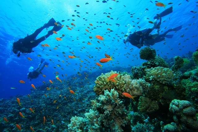 Buceo.