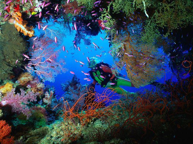 Buzo entre arrecife.