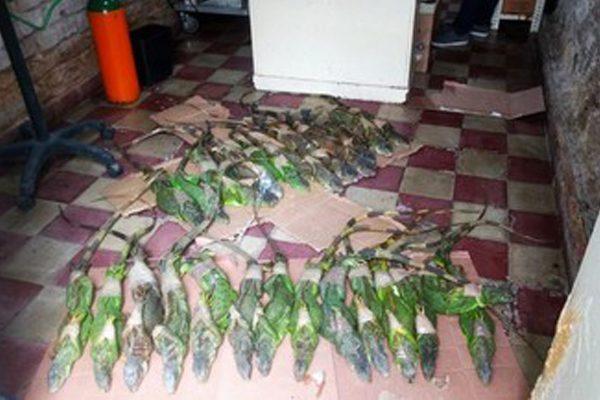 Recibe Profepa 34 iguanas verdes y  29 tortugas rescatadas en la CAPU