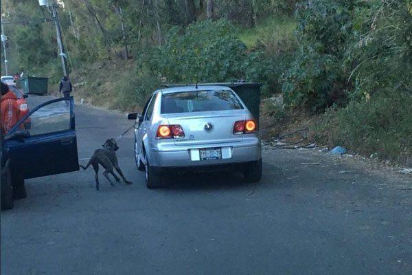 Denuncian que conductor amarra y arrastra a su perro en La Margarita