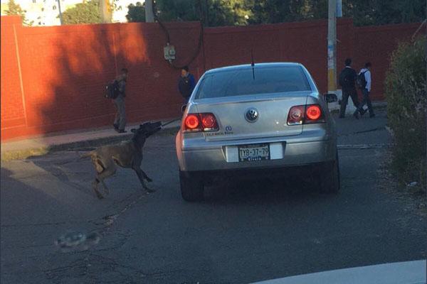 perro carro1