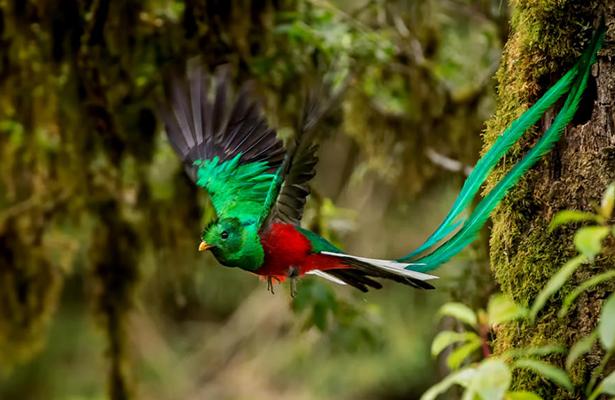 El Quetzal, un ave exótica y sagrada