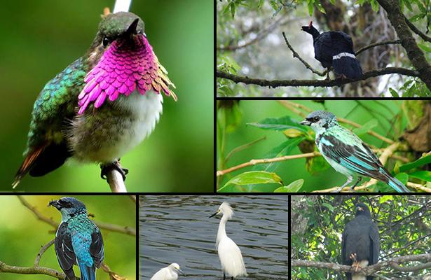 Preparan primer festival de aves en Chiapas