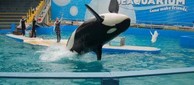 """Kate del Castillo pide que liberen a la orca """"Lolita"""" en Miami"""