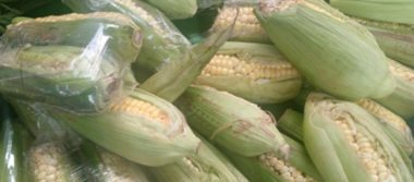 Fortalece México la autosuficiencia en la producción del maíz blanco