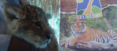 Irapuato reproduce animales en peligro de extinción