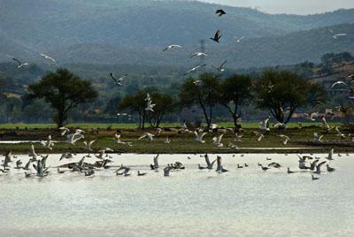 Sanean laguna de Yuriria