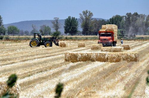 Partidizan apoyos agrícolas