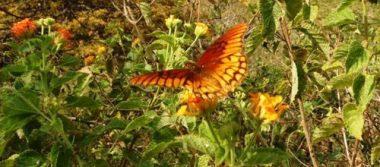 Inicia Recorrido de la Mariposa Monarca