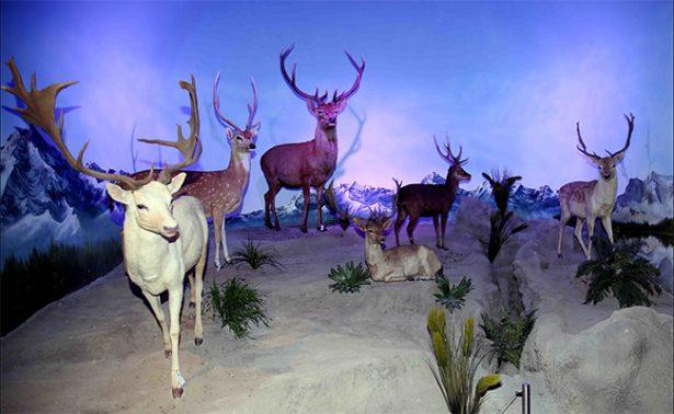 Museo de la Evolución da tecnológica mirada del pasado