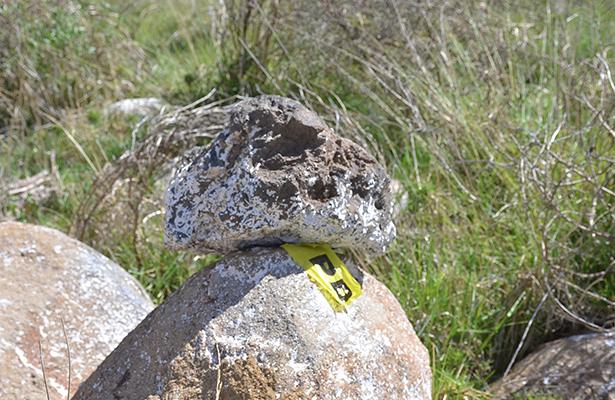 Descubren restos humanos en Amealco