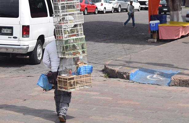 Sin control venta clandestina de aves