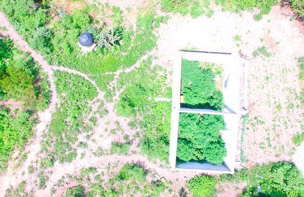 Localizan plantas de marihuana con un dron