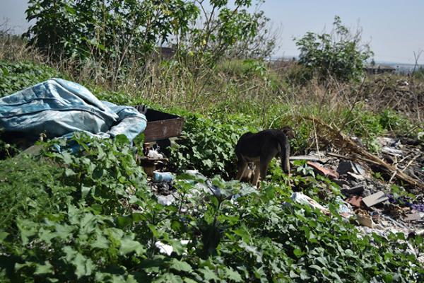 Proliferan perros callejeros en Cuarto Centenario
