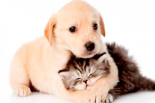 Mascotas deben incluirse en el plan familiar de Protección Civil