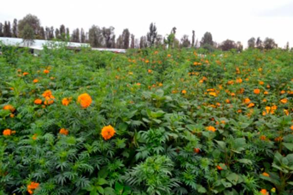 Instalados, Consejos Estatales de Desarrollo Agrario en todo el país