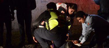 Atropellado fue auxiliado por Cruz Roja
