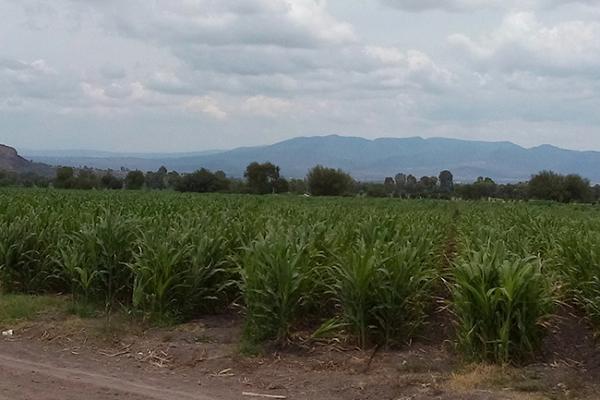 Implementan nuevo sistema de riego en La Valla