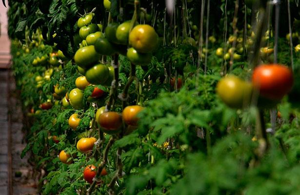Aumenta producción orgánica