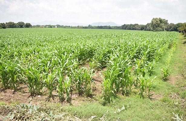 Peligra actividad agrícola