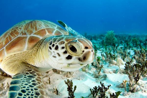 Bajo protección, seis mil nidos de tortuga en santuario de Tulum