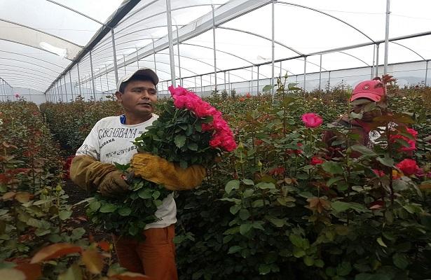 Floricultores en crisis por competencia desleal
