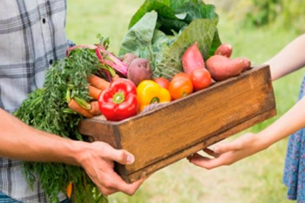 Producción orgánica de alimentos reduciría enfermedades: diputado