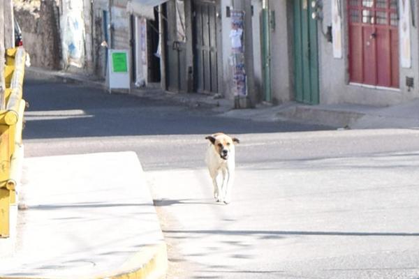 Crece población de perros callejeros
