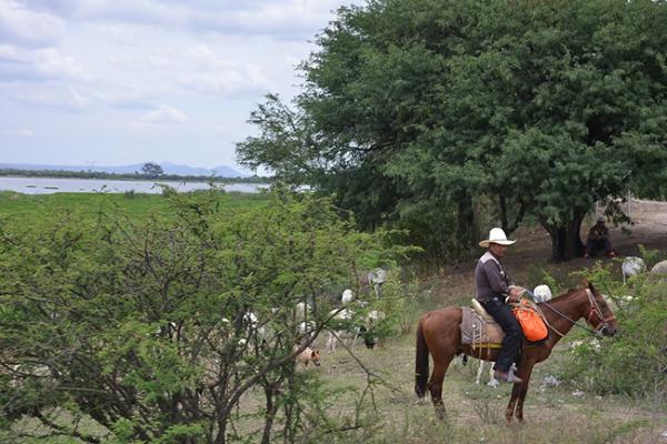 Constante robo de caballos en Tequisquiapan
