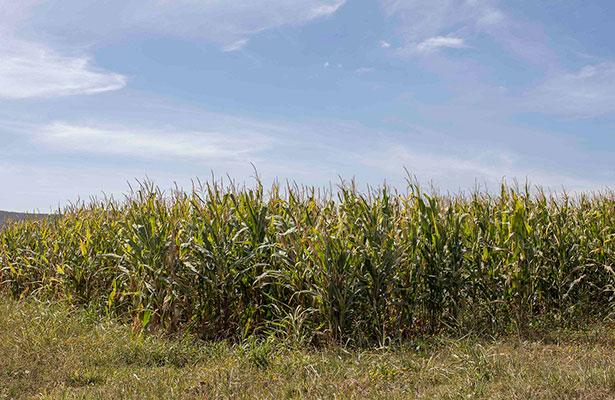 Buscan mejorar producción agrícola en Amealco