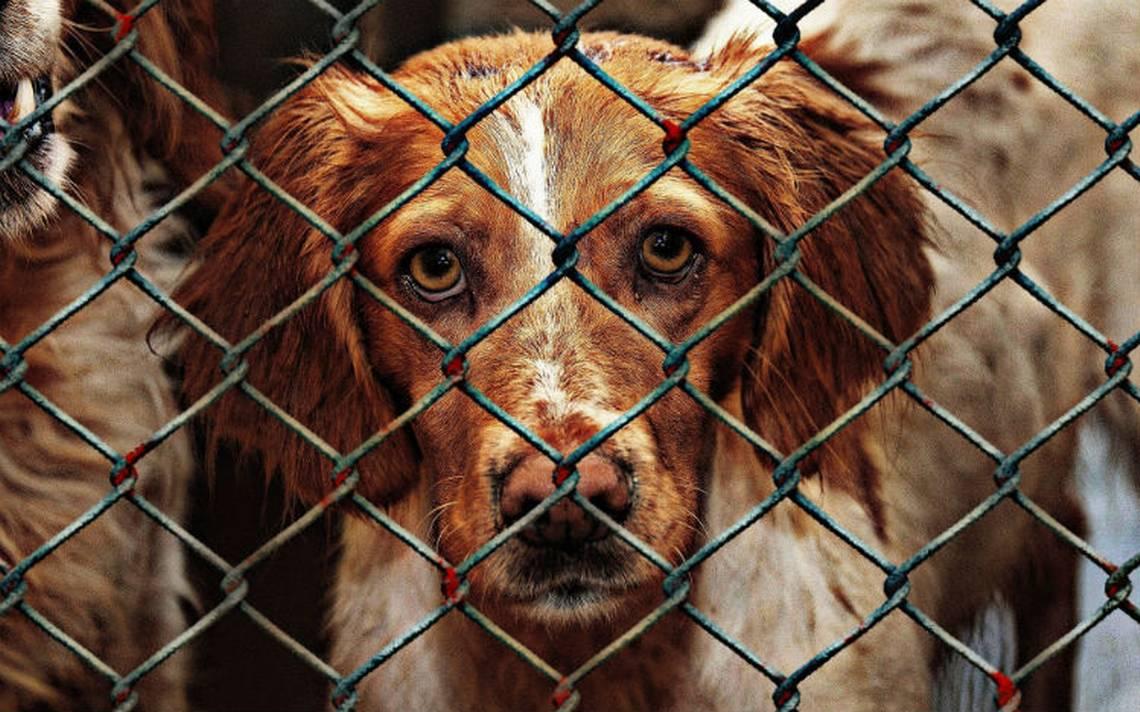 Tras pagar rescate, antirrábico entrega sin vida a perro