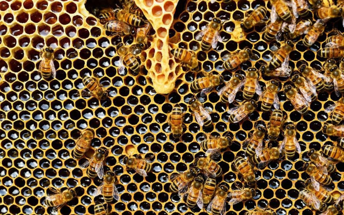 El 'fin de las abejas': un mito que se va zumbando