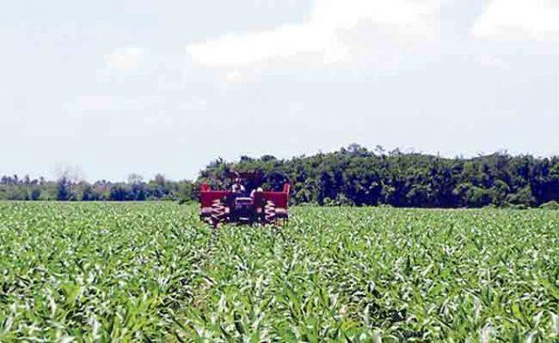 Agricultura por contrato ayuda a los productores locales: Sedarh