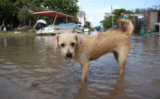 Alerta por el desbordamiento del río Tecolutla