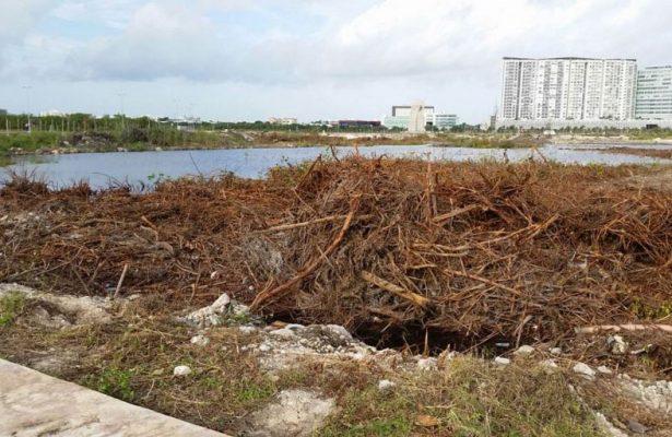 Declaran legal resolución que permitió remoción de vegetación en Tajamar