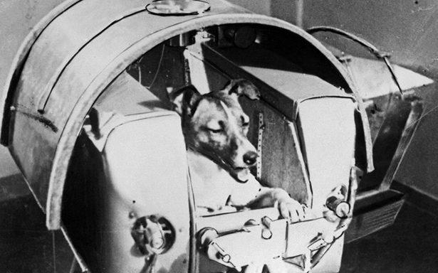 Hace 60 años 'Laika' viajó al espacio pero nunca regresó