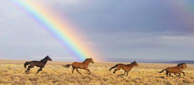 Revelan que los caballos salvajes se han extinguido