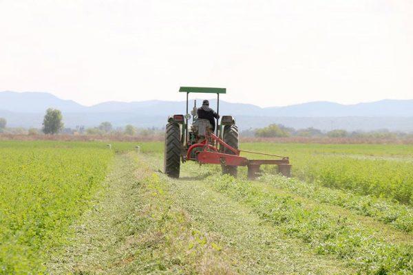 Campesinos potosinos trabajarán en cultivos e invernaderos de Canadá