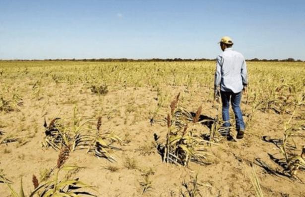 Severa crisis enfrenta el sector ganadero: Diputado
