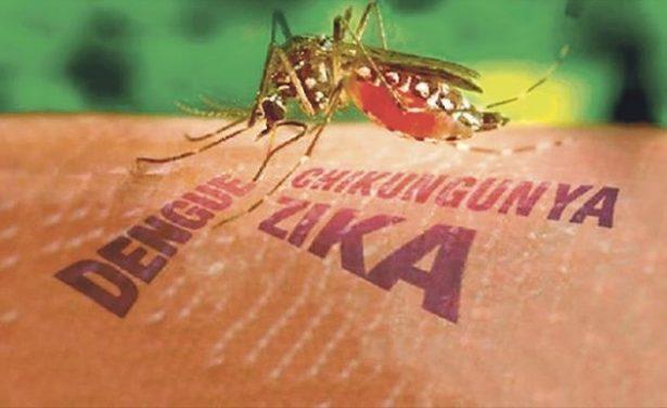 Sin decesos por dengue, zika y Chikungunya