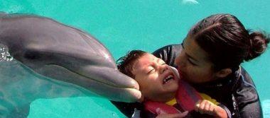 Terapias asistidas con delfines se han aplicado a 140 pacientes