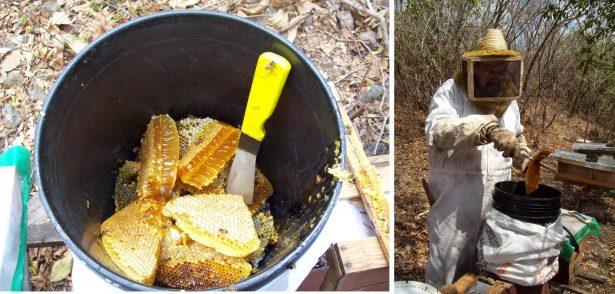 Apoyo a apicultores huastecos brinda Sagarpa van a curso a Yucatán